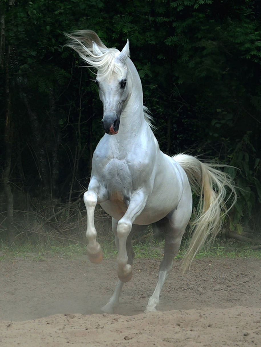 The-beauty-and-grace-of-horses-in-the-photos-by-Wojtek-Kwiatkowski-09