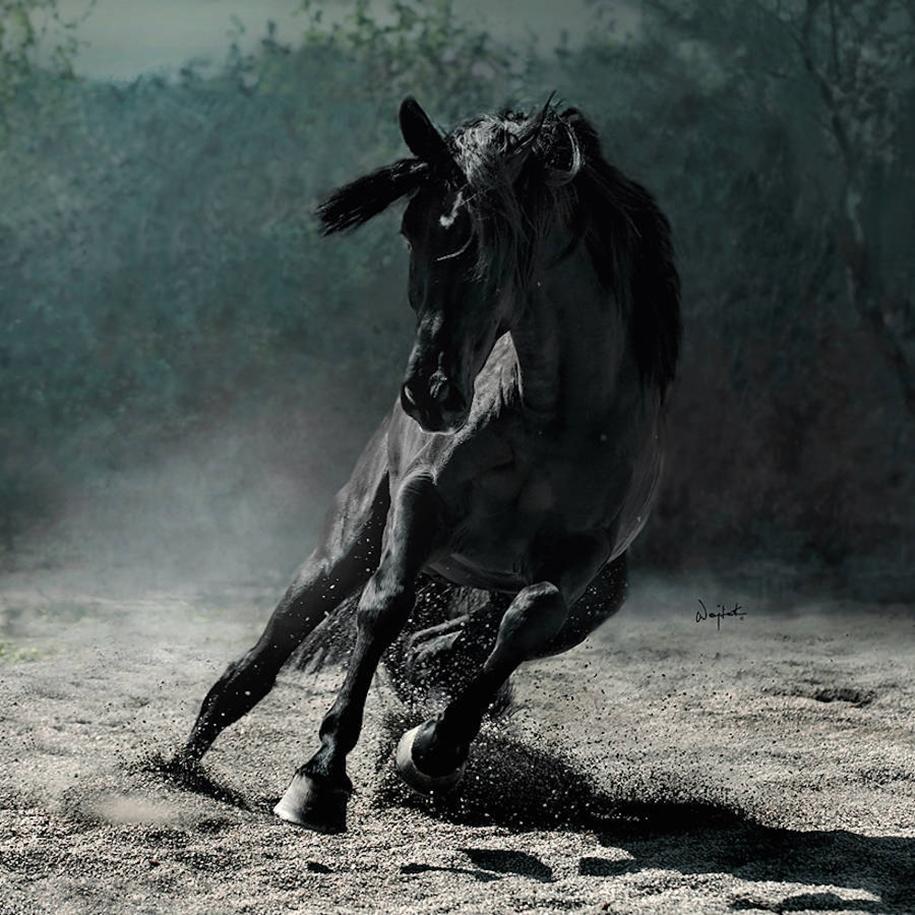 The-beauty-and-grace-of-horses-in-the-photos-by-Wojtek-Kwiatkowski-10