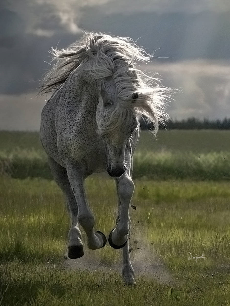 The-beauty-and-grace-of-horses-in-the-photos-by-Wojtek-Kwiatkowski-11
