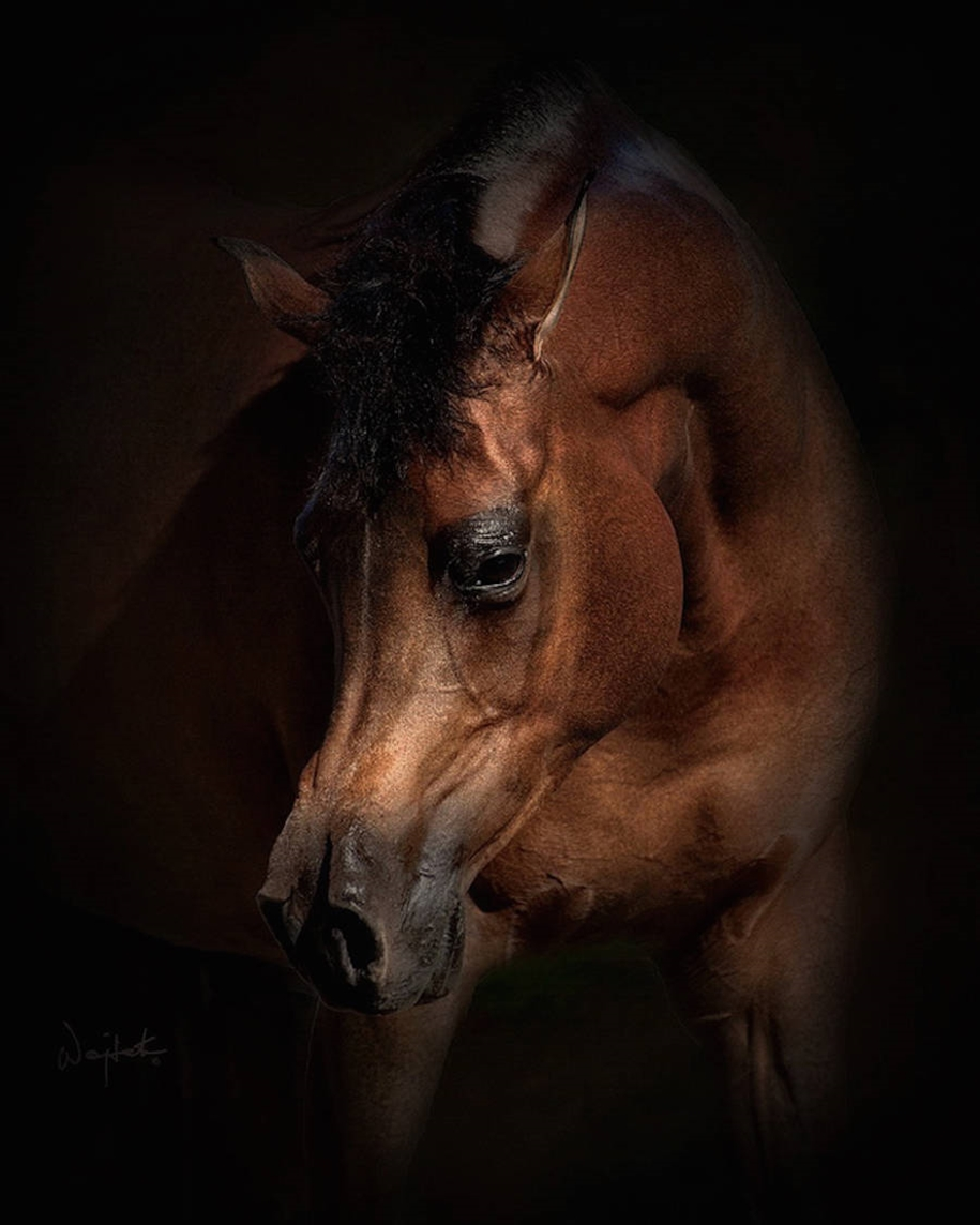 The-beauty-and-grace-of-horses-in-the-photos-by-Wojtek-Kwiatkowski-12