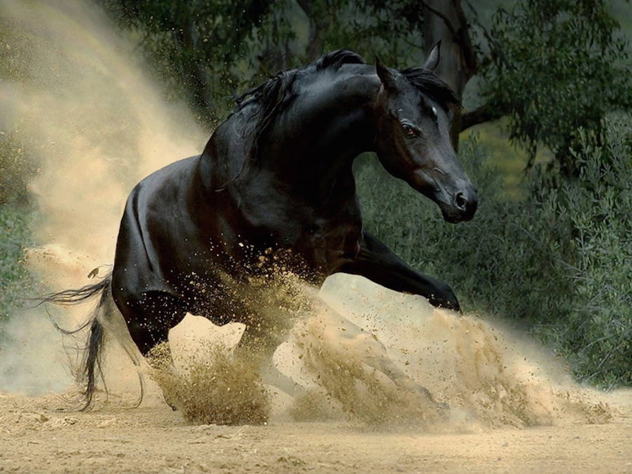 The-beauty-and-grace-of-horses-in-the-photos-by-Wojtek-Kwiatkowski-13