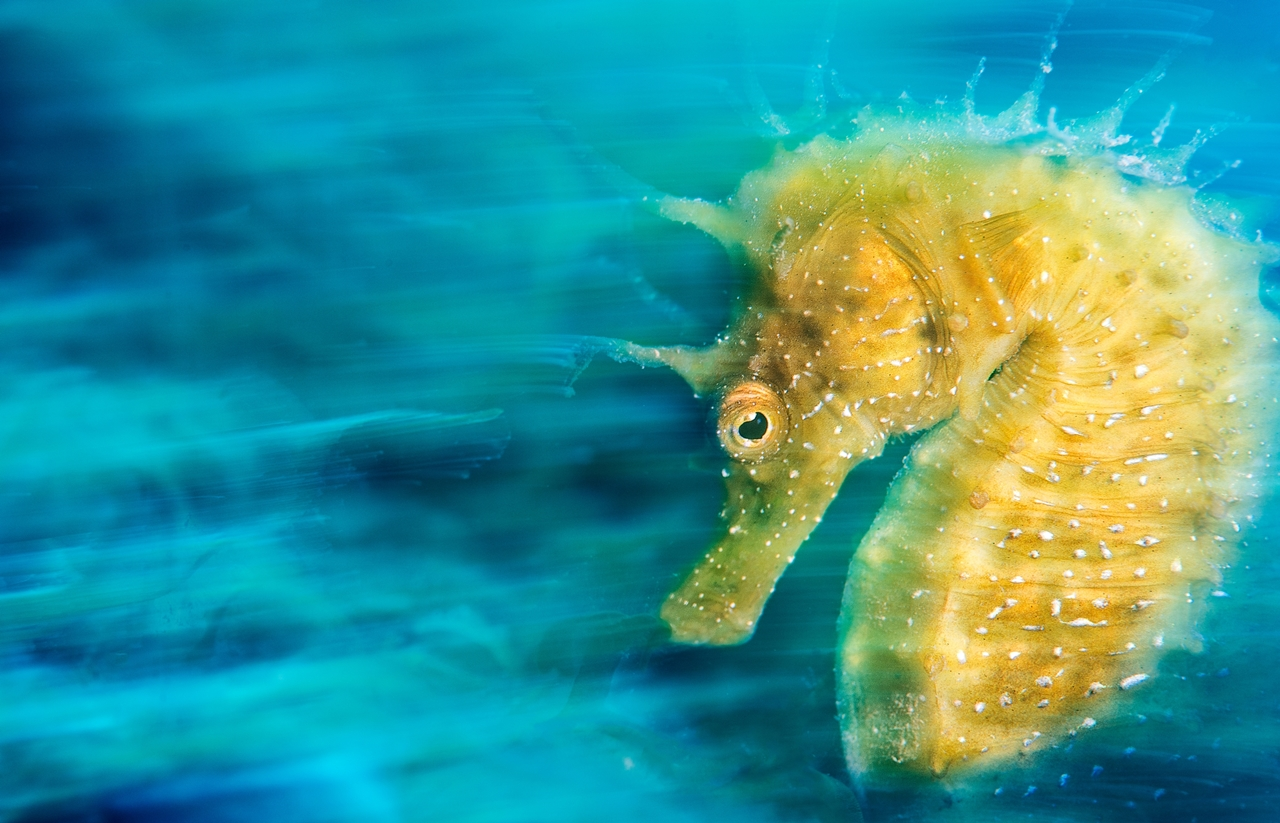 UK-Underwater-Photographer-of-the-Year-2016-Winners-01