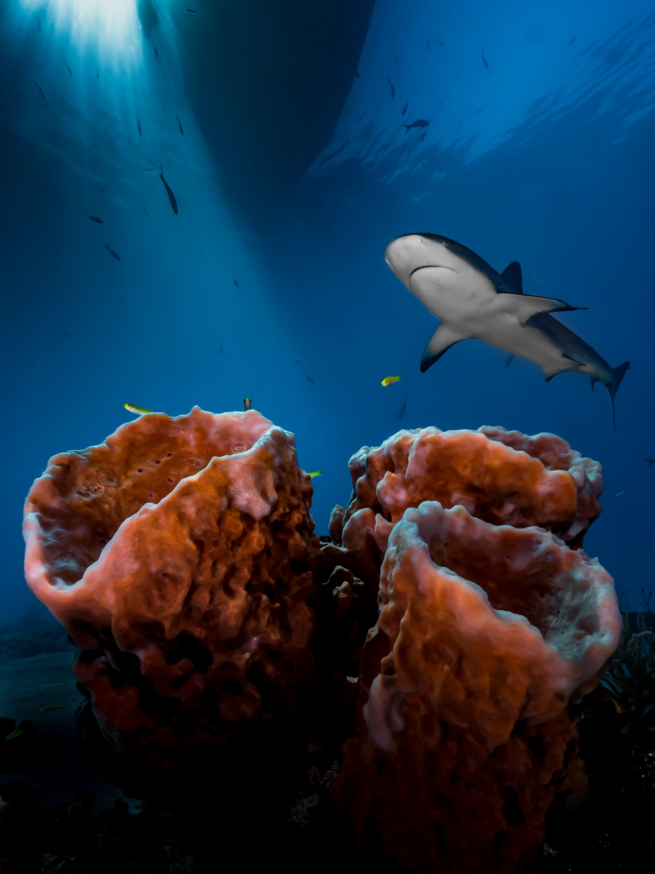 UK-Underwater-Photographer-of-the-Year-2016-Winners-03