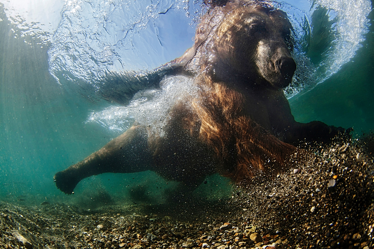 UK-Underwater-Photographer-of-the-Year-2016-Winners-05