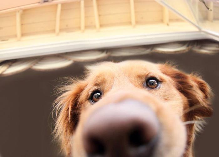 funny-dog-nose-closeups-22__700