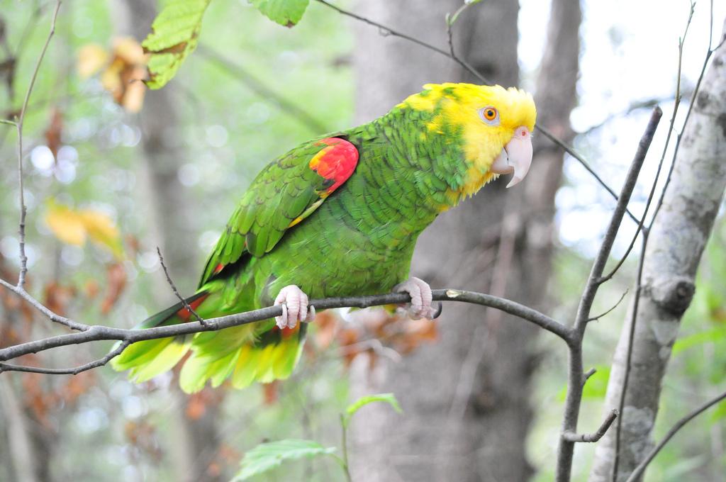 10-species-of-the-largest-parrots-02