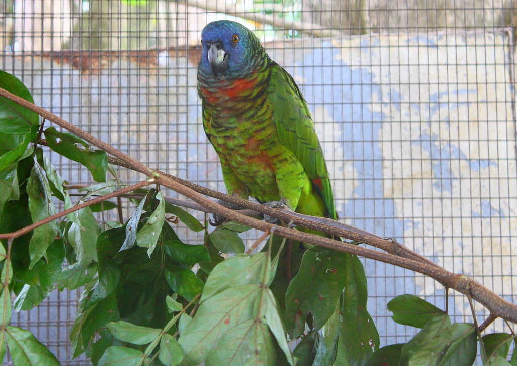 10-species-of-the-largest-parrots-03