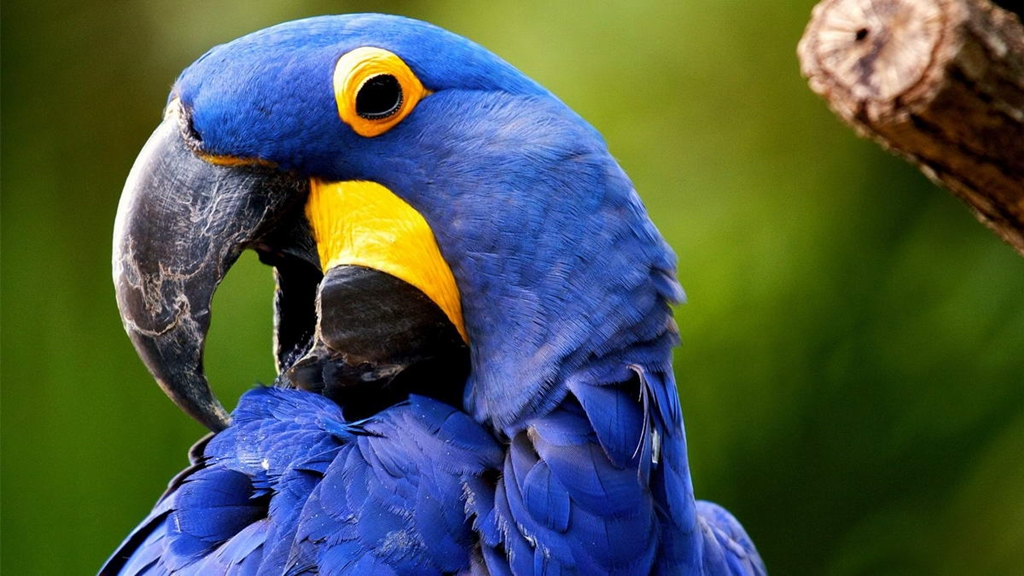 10-species-of-the-largest-parrots-10