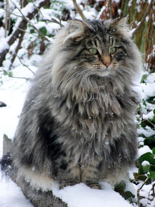 1036305-650-1450082891-fluffy-cats-funny-animal-pics-102__700