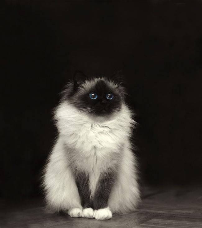 1036455-650-1450082891-fluffy-cats-funny-animal-pics-20__700