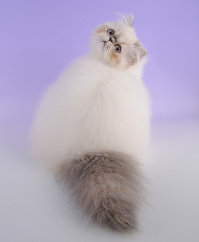 1036655-650-1450082891-fluffy-cat-funny-pics-26__700