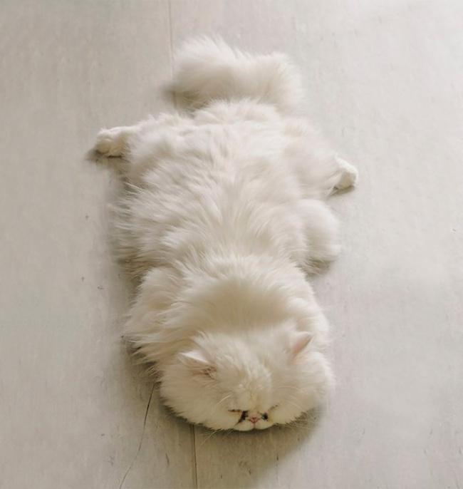 1036755-650-1450082891-fluffy-cats-funny-animal-pics-2__700