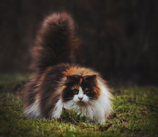 1036805-650-1450082891-fluffy-cats-funny-animal-pics-50__700