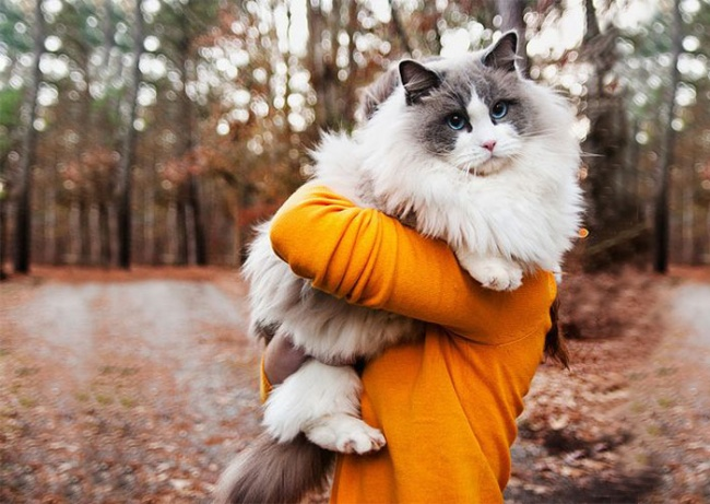 1037155-650-1450082891-fluffy-cats-funny-animal-pics-7__700