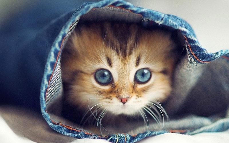 kitties01