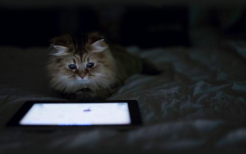 kitties02