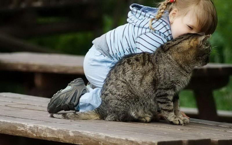 kitties04