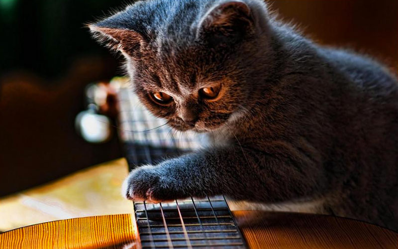 kitties08