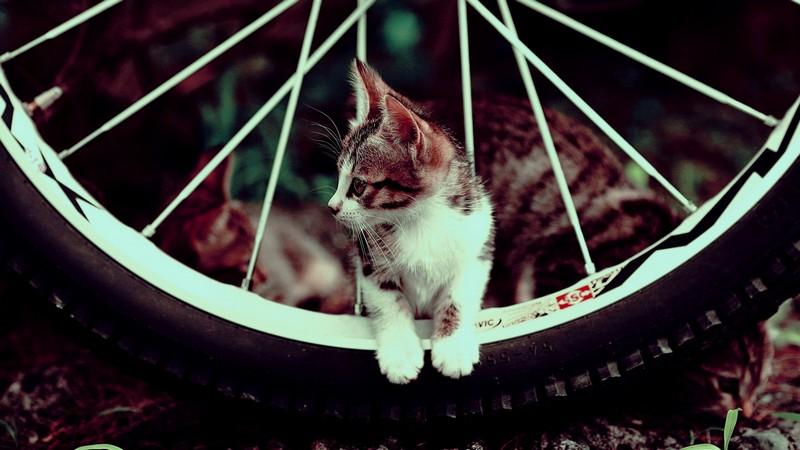 kitties09