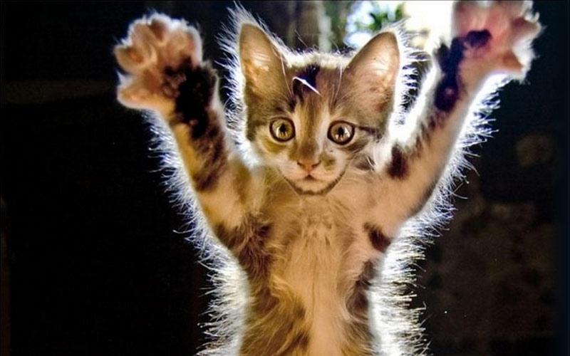 kitties17