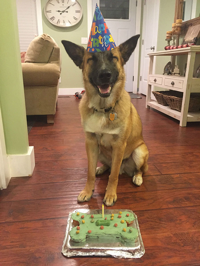 Pets-That-Have-Better-Birthday-Parties-Than-You-5706b252e7eee__700