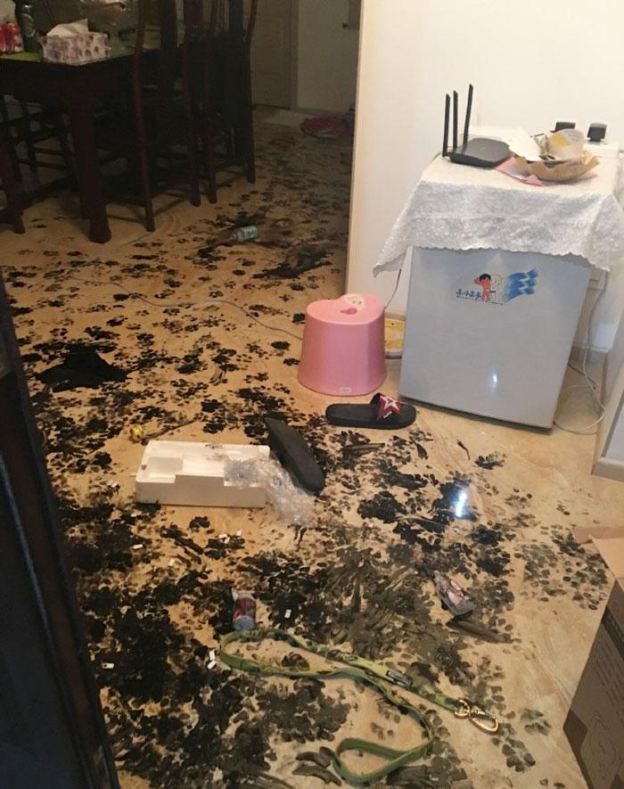 dog-makes-mess-ink-2