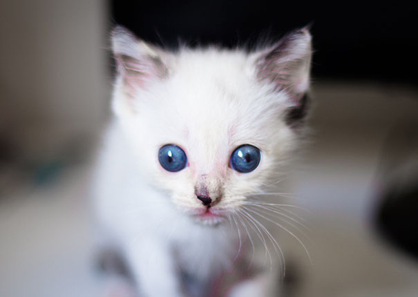 funny-crossed-eyed-cats-derpy-googly-eyes-51-5717826381b5f__605