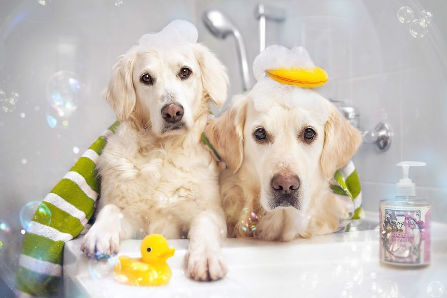 i-photograph-my-dogs-enjoyng-spring-time-10__880