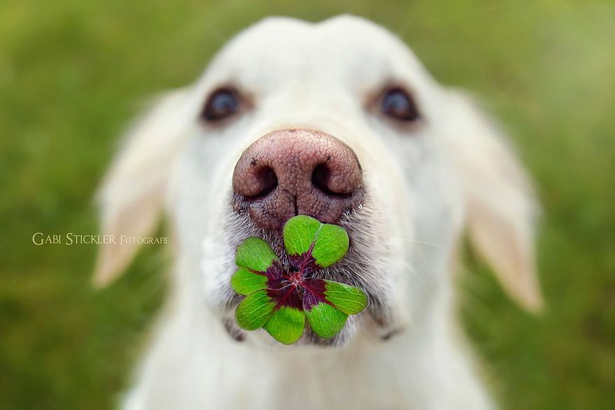 i-photograph-my-dogs-enjoyng-spring-time-2__880 (1)