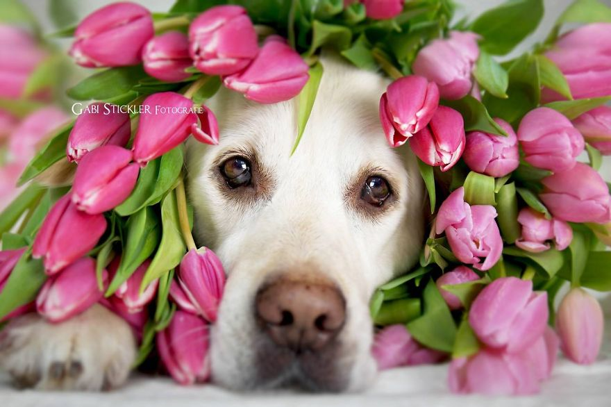 i-photograph-my-dogs-enjoyng-spring-time-3__880 (1)