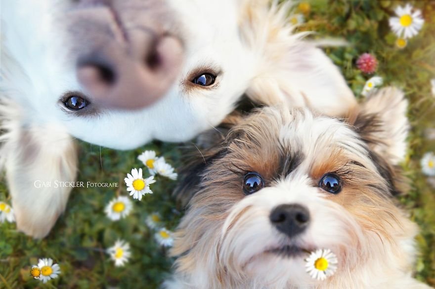 i-photograph-my-dogs-enjoyng-spring-time-3__880
