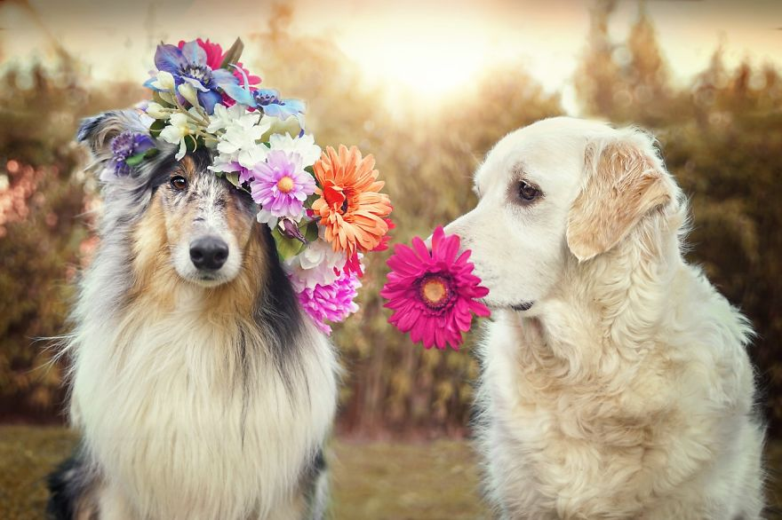i-photograph-my-dogs-enjoyng-spring-time-4__880