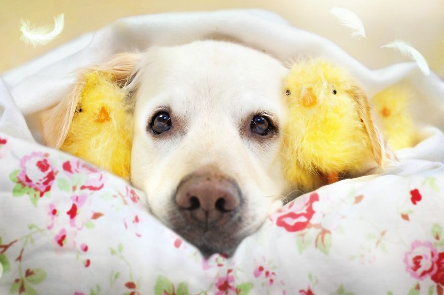 i-photograph-my-dogs-enjoyng-spring-time-6__880 (1)