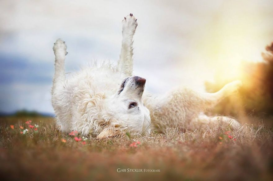 i-photograph-my-dogs-enjoyng-spring-time-7__880 (1)