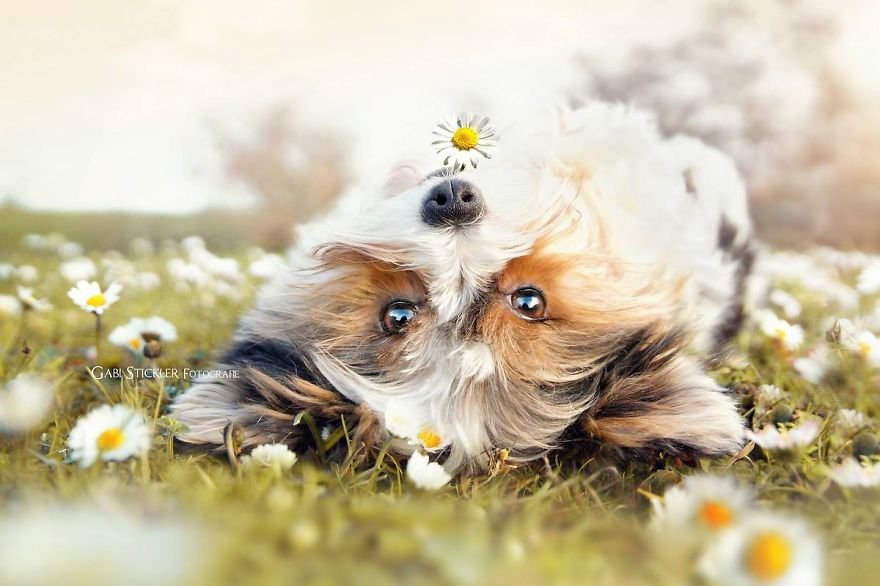 i-photograph-my-dogs-enjoyng-spring-time-9__880 (1)