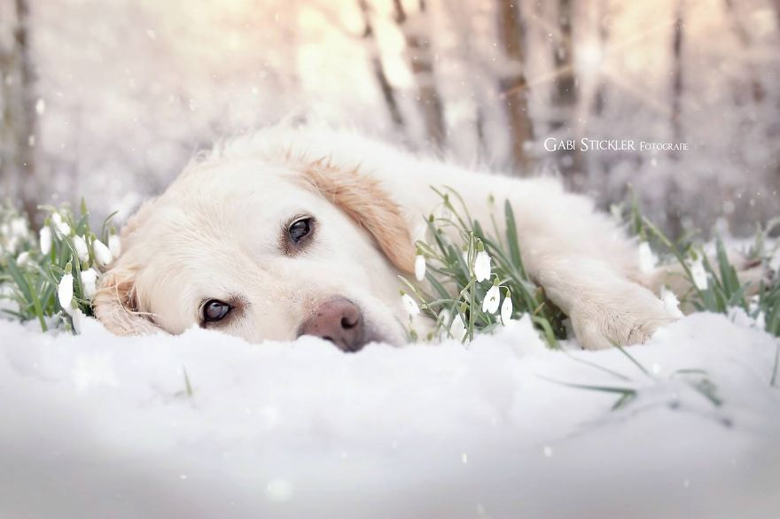 i-photograph-my-dogs-enjoyng-spring-time__880 (1)