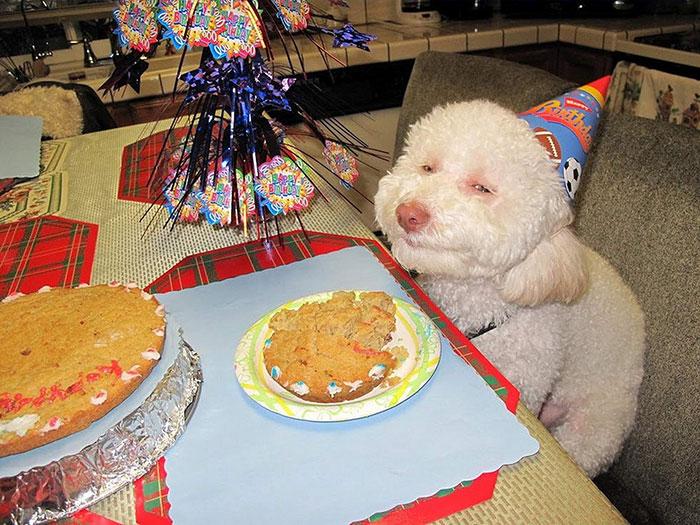 pets-birthday-parties-17-570697596e700__700