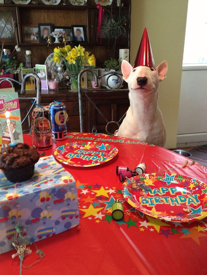 pets-birthday-parties-4-57068ce689702__700