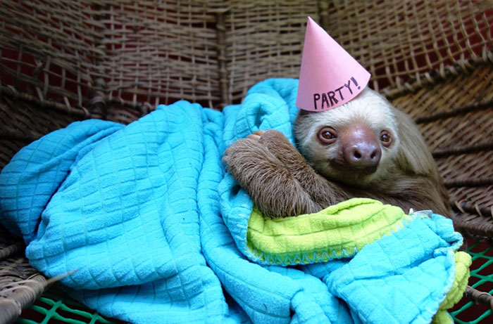pets-birthday-parties-7-57068cea88a45__700