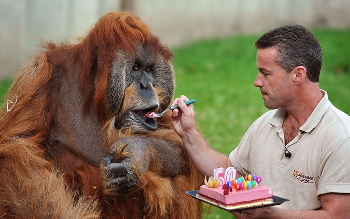 pets-that-have-better-birthday-parties-than-you-57-570e450645d11__700