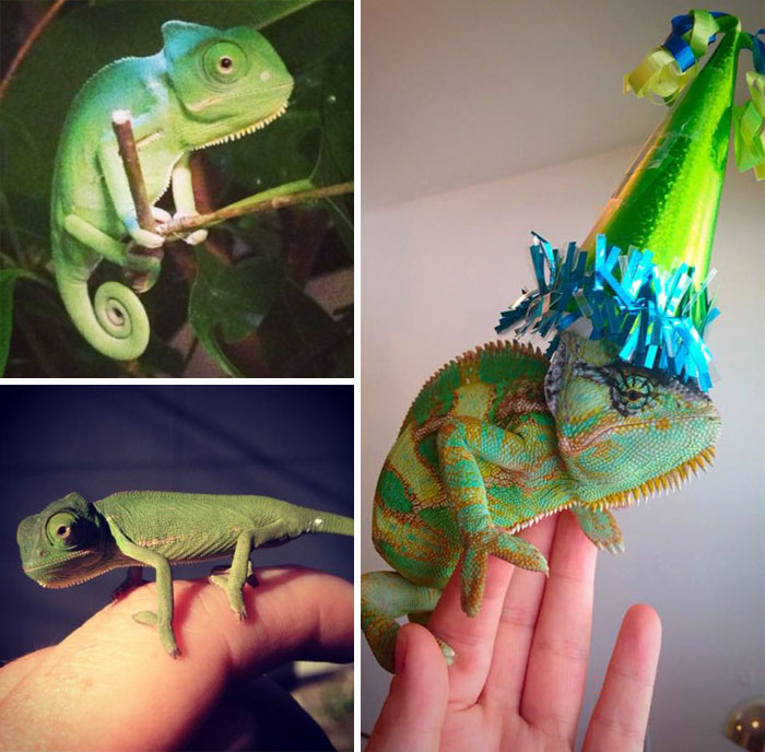 pets-that-have-better-birthday-parties-than-you-70-570f4e0bc1659__700