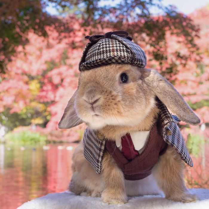 worlds-most-stylish-bunny-puipui-10-571f6584060e9__700