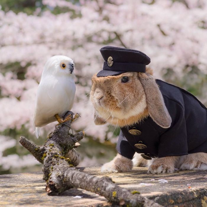 worlds-most-stylish-bunny-puipui-13-571f6589e76de__700