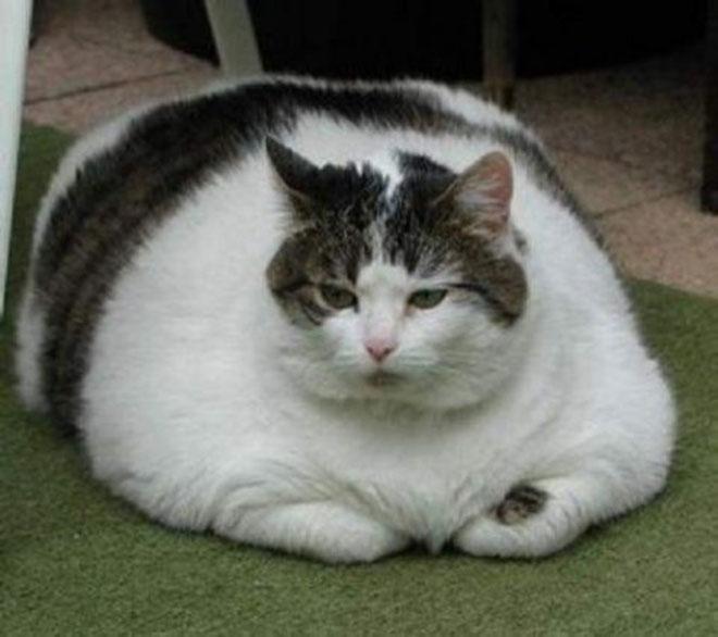 big-cat-10