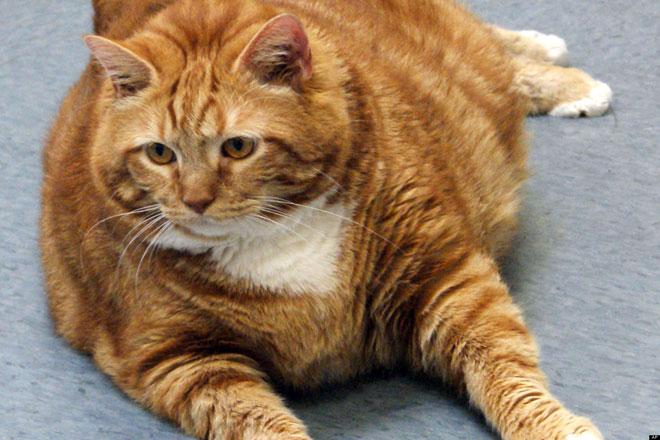 big-cat-13