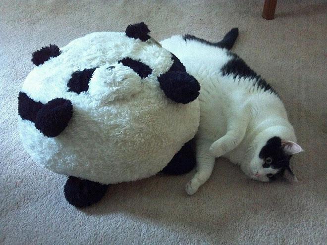big-cat-17