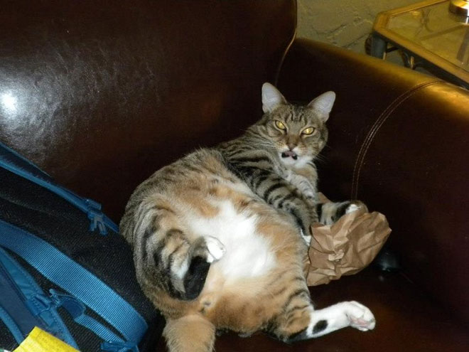 big-cat-9