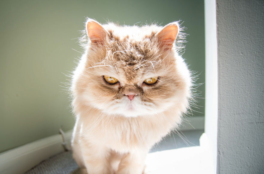 emotions_portrayed_by_cats_01