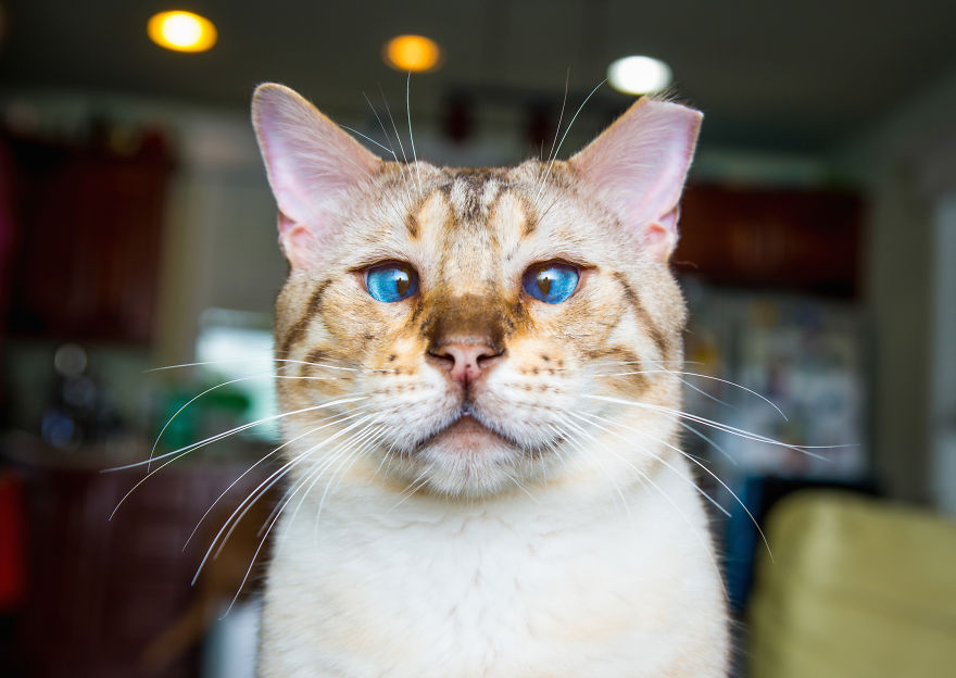 emotions_portrayed_by_cats_02