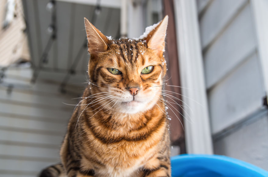 emotions_portrayed_by_cats_03